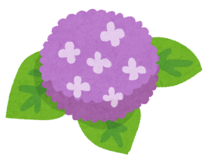 flower_ajisai4_purple